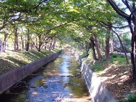 Tamagawazyoussui2